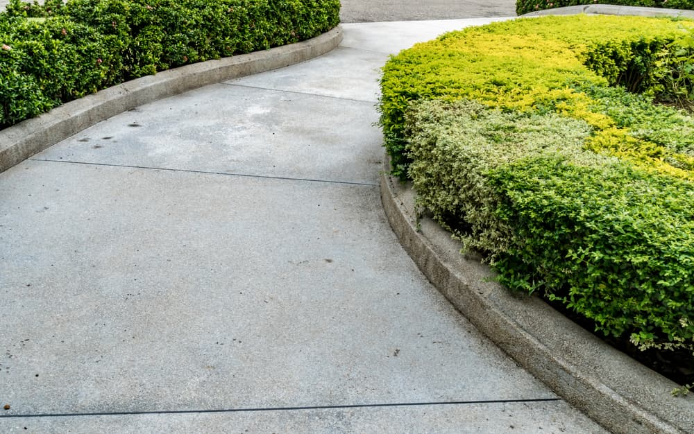 Curve concrete pathway with green trimmed bush hedge in the park